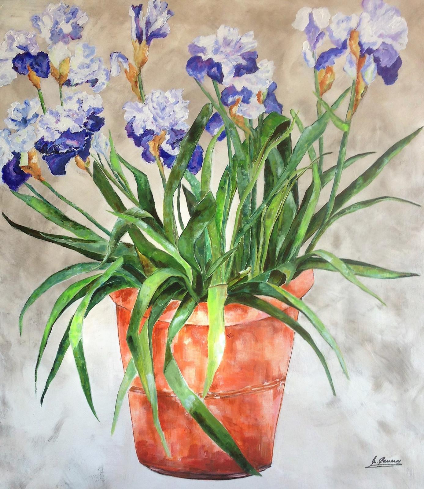 White & blue irises