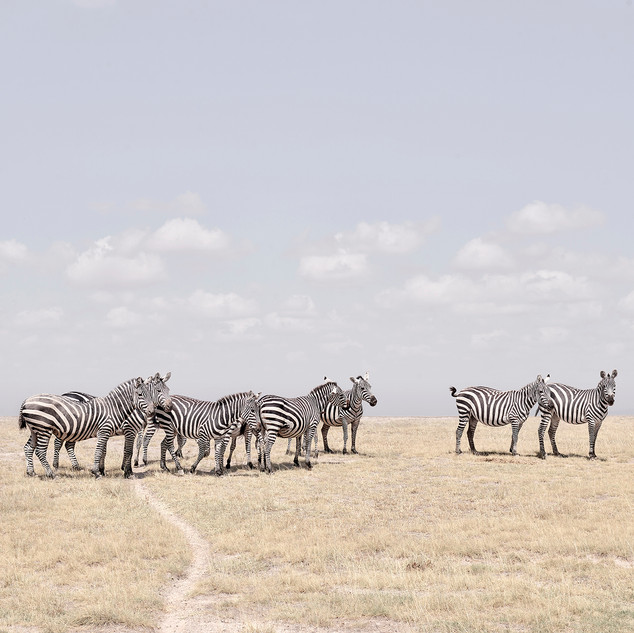Zebra Plains, Maasai Mara, Kenya, 2019