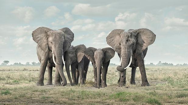 Solice, Amboseli, Kenya, 2019_edited.jpg