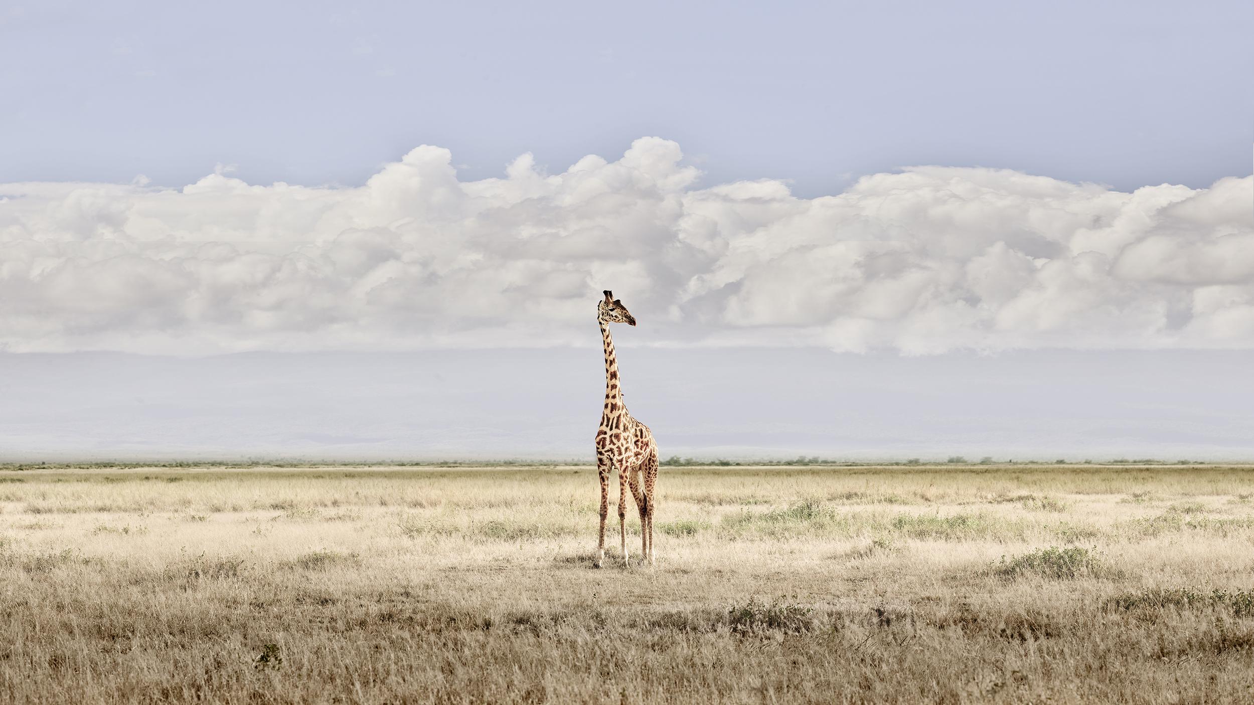 Head in the Clouds, Amboseli, Kenya, 201