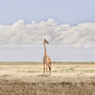 Head in the Clouds, Amboseli, Kenya, 2019