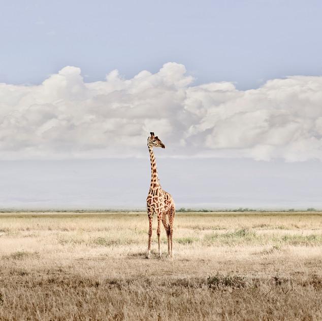 Head in the Clouds, Amboseli, Kenya, 2019