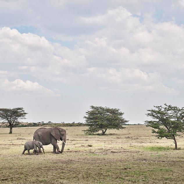 Elephant Mother and Calf, Maasai Mara Kenya 2019