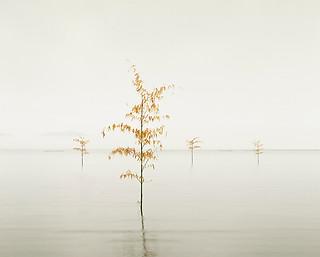 Orange Leaves, Ariake Sea, Kyushu, Japan, 2010
