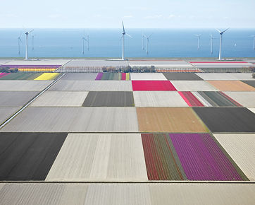 Tulips and Turbines 01.jpg