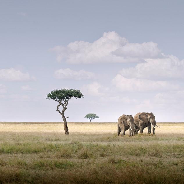 Elephant Pair, Amboseli, Kenya, 2019