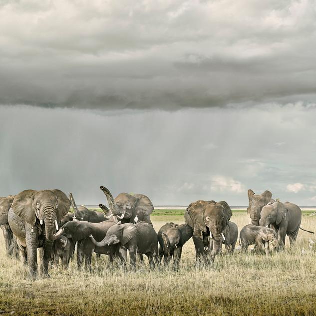 Elephant Day Care Amboseli Kenya, 2019