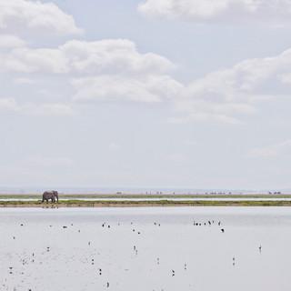 Elephant on the Horizon, Amboseli, Kenya 2019
