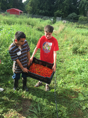 GR JJ and Hayden carrying tomatoes.jpg