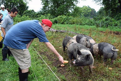 GR Carson feeding the pigs.jpg