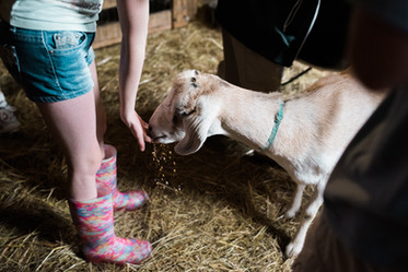 GR Annelise feeding the goats.jpg