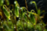 moss with water.jpg