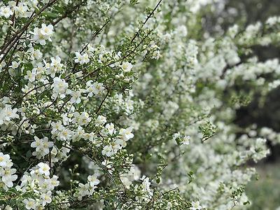 Linnaea Design Flower Gardens