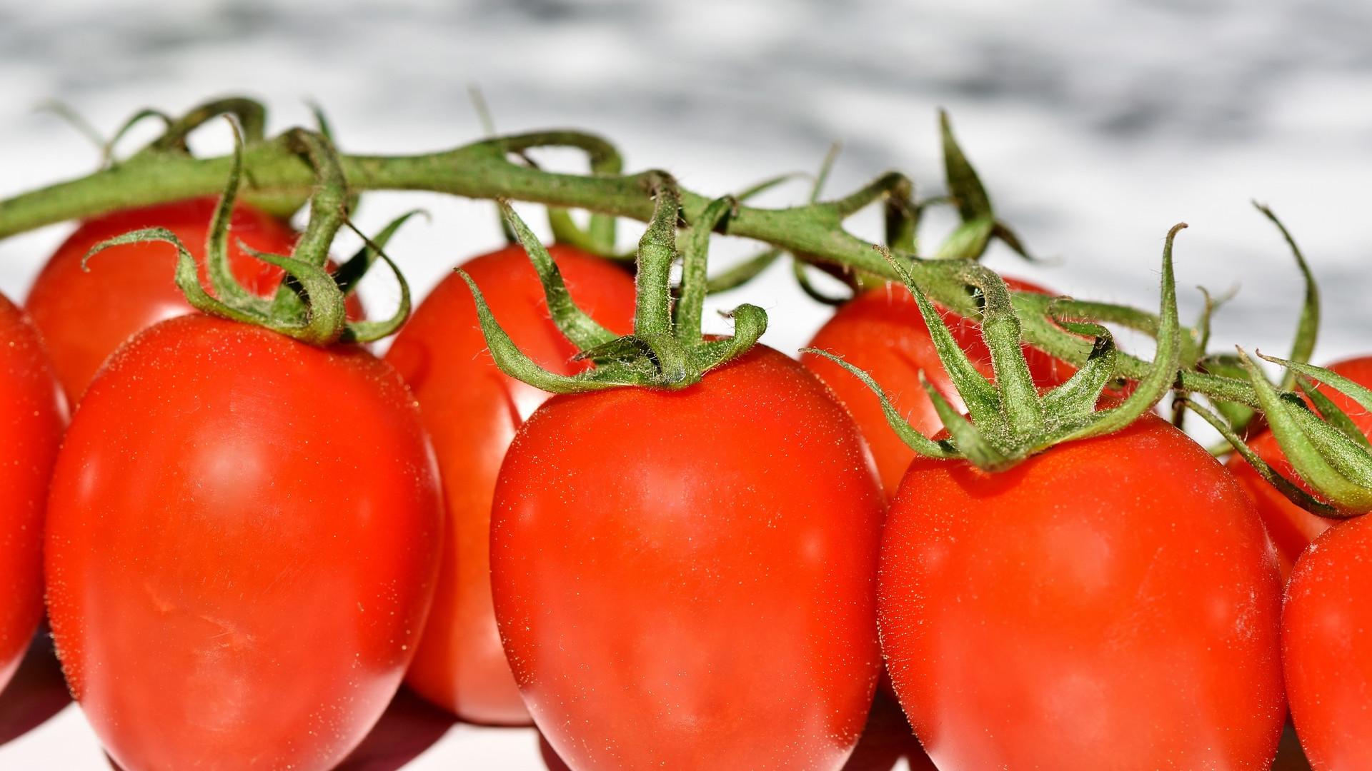 tomatoes-3480643_1920.jpg
