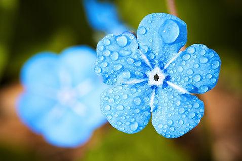 flower-2197679_1920.jpg