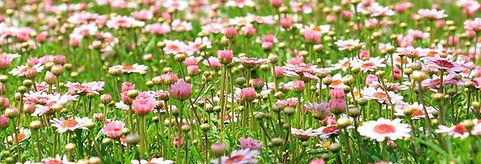 flower-meadow-1510602_1920.jpg