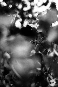 bedouinrecords_bdn024_maenad_veyl_artist_photo_3.jpg