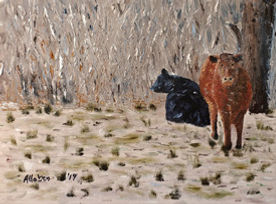 Taos Cattle