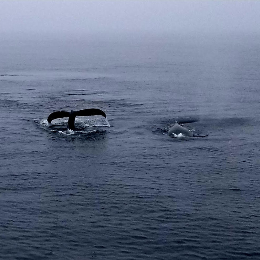 Whale mother & baby