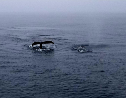 You'll Love This! - Breath Practices with Humpback Whales