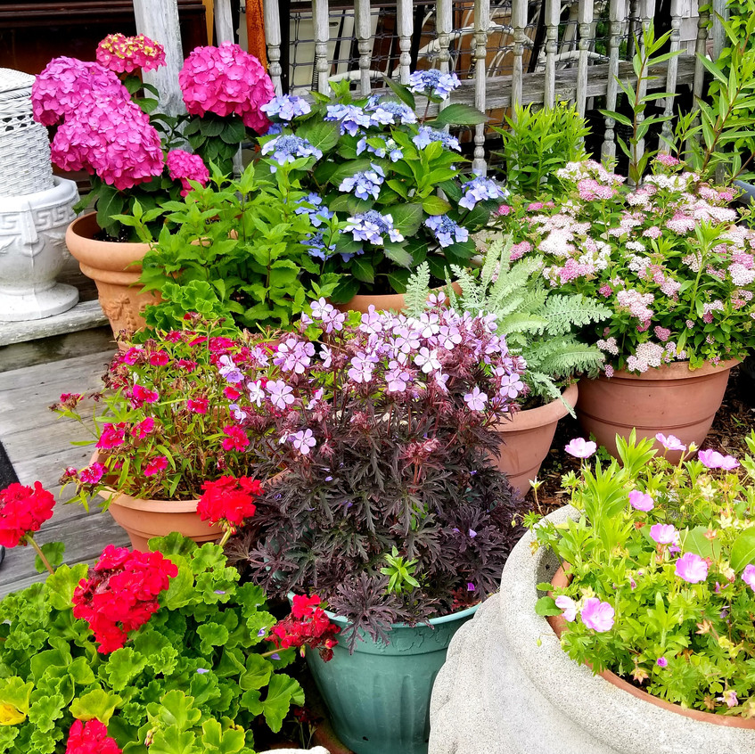 Strikingly beautiful flowers