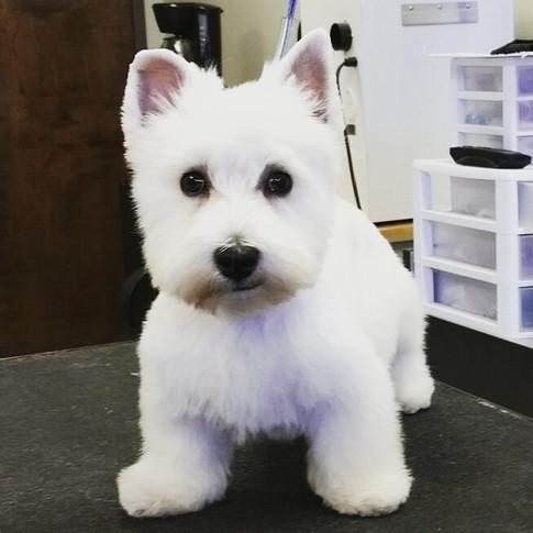 white dog.jpg