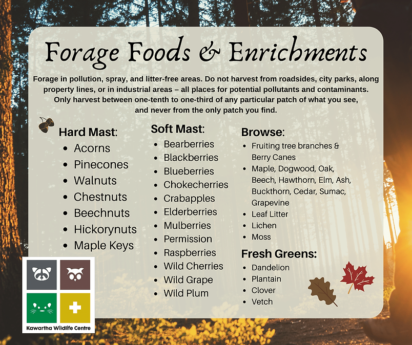 Forge Foods (1).png