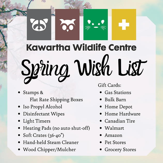 Spring Wish List (1).png