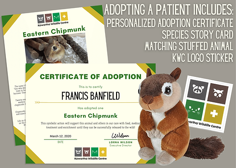 Adopt-a-Patient