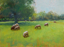 the sheep of his pasture