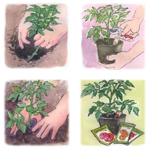 tomatoescans.jpg