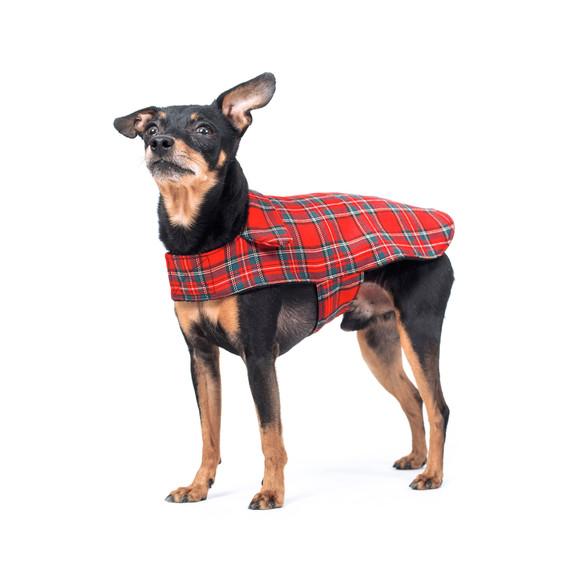Cappotti per cani