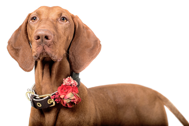 Decorazioni floreale per cani