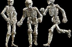 skeleton-3342754_1920.png