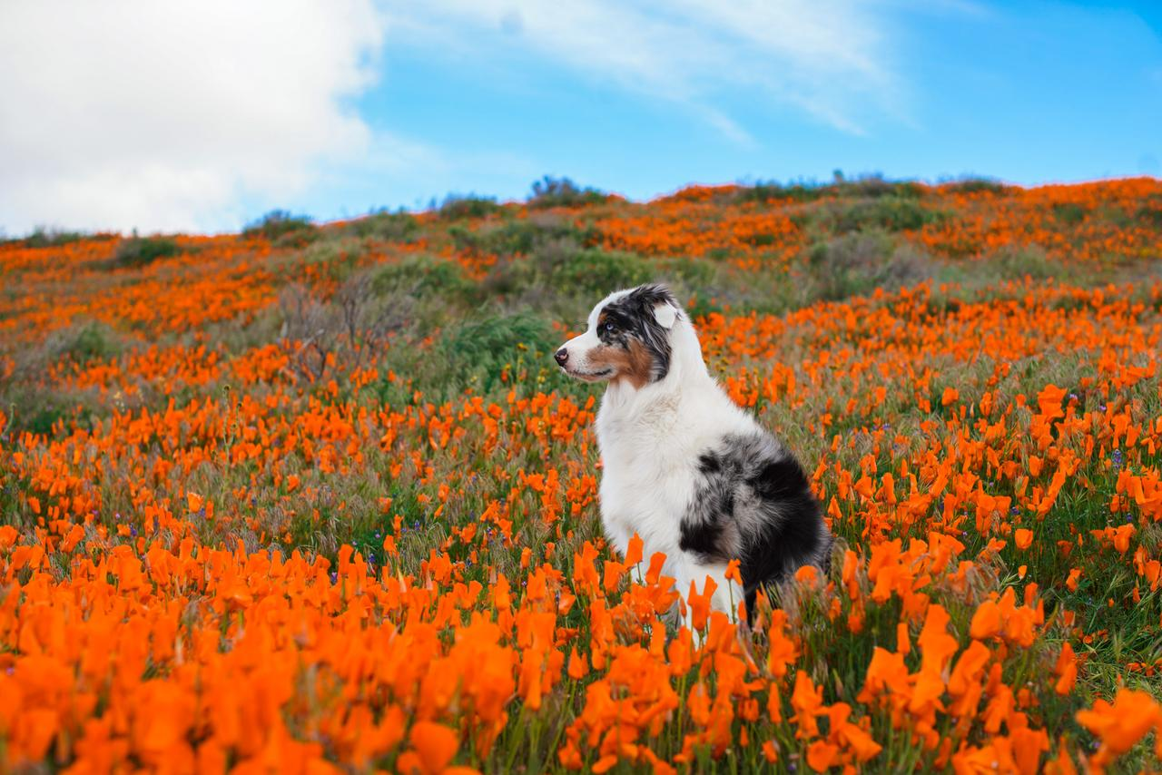 spring_portrait_iii_by_deliquesce_flux_d