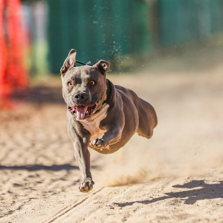 Dash Dogs July 26th Trial
