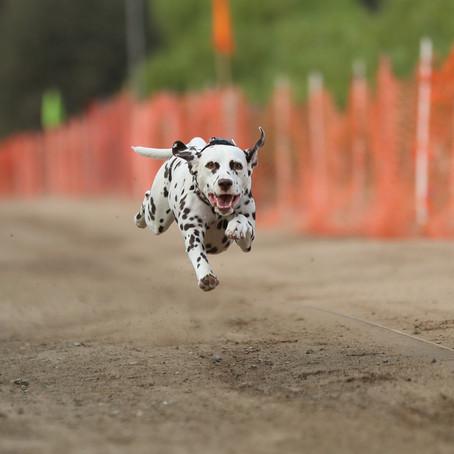 Dash Dogs September 13th