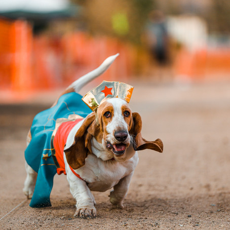 Dash Dogs Halloween