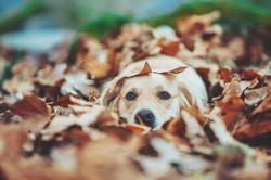 fall_is_here_by_deliquesce_flux_dcrubcj-