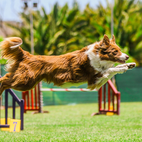 AKC Agility Trial June 11
