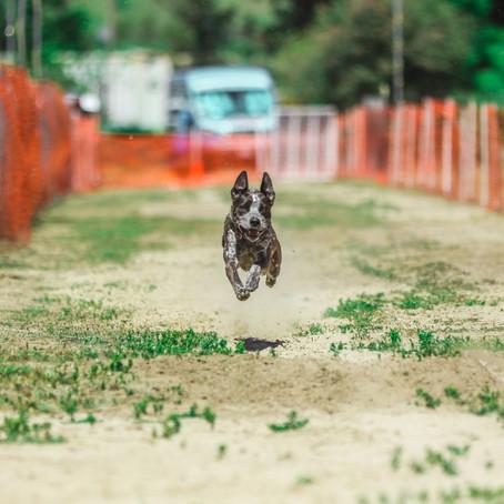 AKC Fast CAT Trial