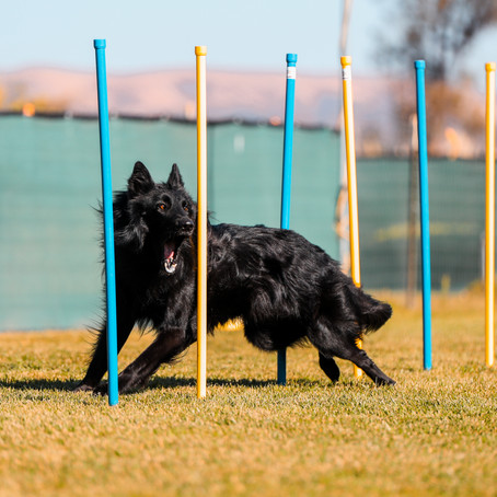 AKC Agility Trial November 11 and 12