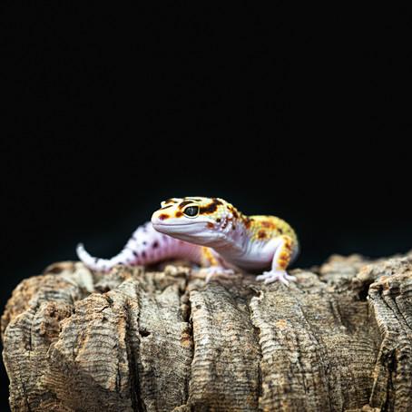 Gecko Session