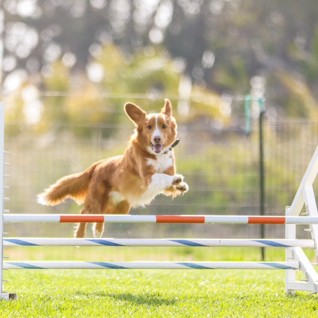 Weekday Wing Ding AKC Agility Trial April 6th