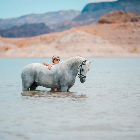 Lake Mead Horse Session