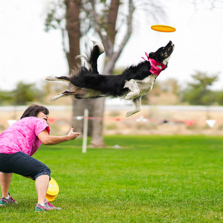 Disc Dogs Session