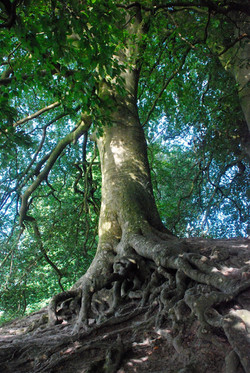 Roots, Avebury