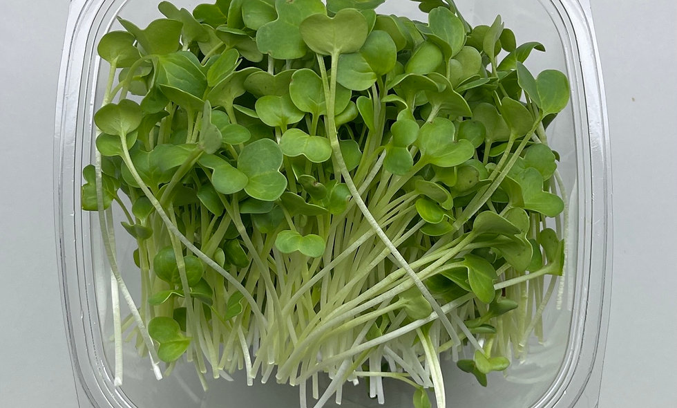 Green (Kaiware) Radish