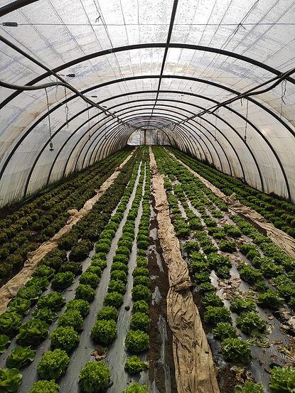 agriculture raisonnée en côte d'or