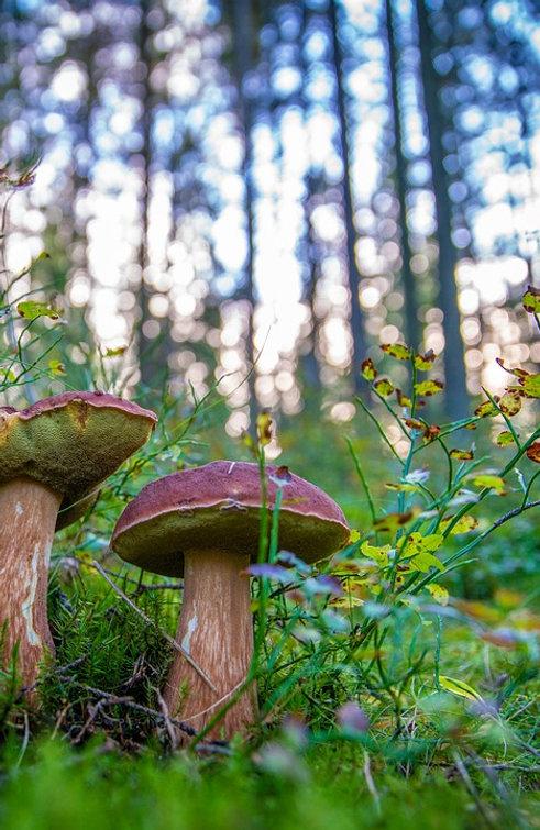 mushrooms-3695414_960_720.jpg